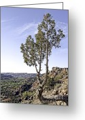Palo Duro Canyon State Park Greeting Cards - Living on the Edge Greeting Card by Charles Dobbs