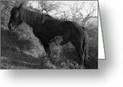 Caballo Greeting Cards - Living textures Greeting Card by Fernando Alvarez