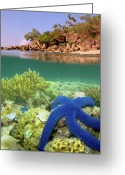 Lizard Greeting Cards - Lizard Island Reef Greeting Card by Adam Gormley Photography