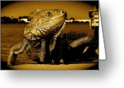 Wild Lizard Greeting Cards - Lizard Greeting Card by Monique Wegmueller