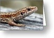 Side View Greeting Cards - Lizard Greeting Card by Svein Nordrum