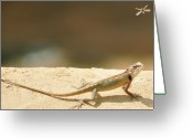 Lizard Greeting Cards - Lizards Greeting Card by Shahzeb Nasir