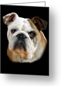 Dog Portrait Digital Art Greeting Cards - Llewellyn Greeting Card by Julie L Hoddinott
