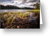 Stunning Greeting Cards - Loch Ard From the Reed beds landscape Greeting Card by John Farnan