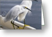 Herons Greeting Cards - Loitering Greeting Card by Kevin Bergen