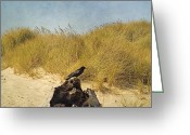 Dune Grass Greeting Cards - Lone Crow Greeting Card by Bonnie Bruno