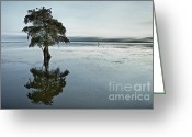 Contemplation Greeting Cards - Lone cypress tree in water.  Greeting Card by John Greim
