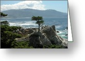 Guywhiteleyphoto.com Greeting Cards - Lone Cyprus 1045 Greeting Card by Guy Whiteley
