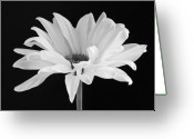 Black And White Flower Greeting Cards - Lone Daisy Greeting Card by Harry H Hicklin