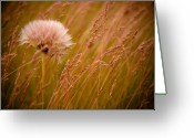 Outdoors Greeting Cards - Lone Dandelion Greeting Card by Bob Mintie
