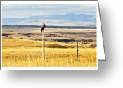 Lewistown Greeting Cards - Lone Hawk Greeting Card by Sheri Bartoszek