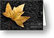 Walk Way Photo Greeting Cards - Lone Leaf Greeting Card by Carlos Caetano