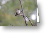 Lonly Greeting Cards - Lone October Hummingbird Greeting Card by Sandra Wright