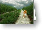 Striped Greeting Cards - Lone Red And White Cat Walking Along Grassy Path Greeting Card by © Axel Lauerer