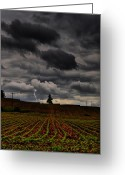 Cornfield Greeting Cards - Lone Strike Greeting Card by Emily Stauring
