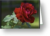 Florida Flowers Greeting Cards - Lone Survivor Greeting Card by Frank Feliciano