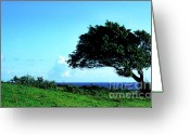 Green Pasture Greeting Cards - Lone Tree Blue Sea Greeting Card by Thomas R Fletcher
