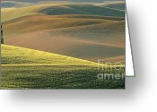 Farm Fields Greeting Cards - Lone Tree in the Palouse  Greeting Card by Sandra Bronstein