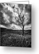 Stunning Greeting Cards - Lone Tree on the Ayrshire moors Greeting Card by John Farnan