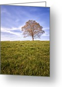 Wide Angle Photo Greeting Cards - Lone Tree on the hill colour Greeting Card by John Farnan