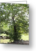 Foundations Greeting Cards - Lone Tree Standing at the Ruined Foundation of Historic Home Greeting Card by JB Photography