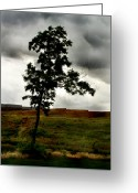Dreary Greeting Cards - Lonely Greeting Card by Aimee Reutercrona