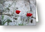 Milos Dacic Photo Greeting Cards - Lonely poppy Greeting Card by Milos Dacic