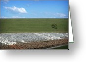 Barren Limestone Greeting Cards - Lonely Tree Greeting Card by Amber Flowers