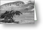 Nazca Greeting Cards - Lonely Tree Greeting Card by Darcy Michaelchuk