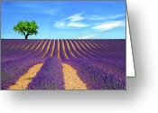 Purple Sky Greeting Cards - Lonely Tree On Lavender Field Greeting Card by Martina Meglic