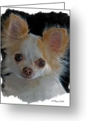 Pure Digital Art Greeting Cards - Long Coat Chihuahua Greeting Card by Larry Linton