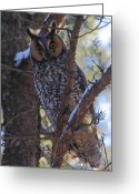 Long Eared Owl Greeting Cards - Long-eared Owl Greeting Card by Bruce J Robinson