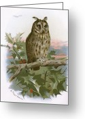 Long Eared Owl Greeting Cards - Long-eared Owl, Historical Artwork Greeting Card by Sheila Terry