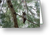 Long Eared Owl Greeting Cards - Long Eared Owl Greeting Card by Jim Salisbury
