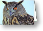 Long Eared Owl Greeting Cards - Long-Eared Owl Greeting Card by Lori Lafargue