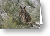 Long Eared Owl Greeting Cards - Long-Eared Owl Greeting Card by Tammy Wolfe