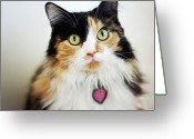 Staring Greeting Cards - Long Haired Calico Cat Greeting Card by Genevieve Morrison