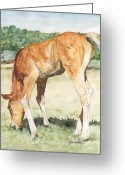 Sunflower Studio Art Greeting Cards - Long-legged Colt Horse Art Painting Greeting Card by K Joann Russell
