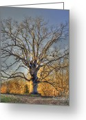Tree Limbs Greeting Cards - Longevity II Greeting Card by Benanne Stiens