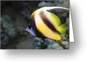 Pennant Greeting Cards - Longfin Bannerfish Greeting Card by Dimitris Neroulias