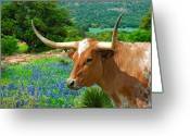 Texas Hill Country Greeting Cards - Longhorn Blue Greeting Card by Robert Anschutz
