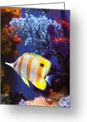 Sea Life Art Greeting Cards - Longnose Butterflyfish Greeting Card by Amy Vangsgard