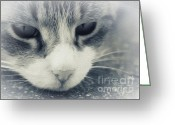 Postwork Greeting Cards - Look into my Eyes Greeting Card by Jutta Maria Pusl