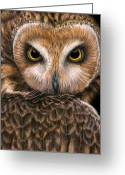 Owl Drawings Greeting Cards - Look into my Eyes Greeting Card by Pat Erickson