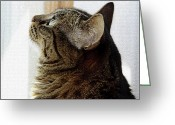 Fur Stripes Greeting Cards - Look Out Window Tabby Cat Greeting Card by Andee Photography
