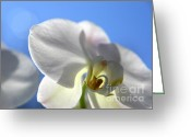 Flower Photograph Greeting Cards - Look to the Sky  Greeting Card by Neal  Eslinger