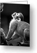 On-the-look-out Greeting Cards - Look Up Greeting Card by Darcy Michaelchuk