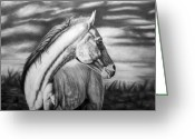 Wild Horse Drawings Greeting Cards - Looking Back Greeting Card by Glen Powell