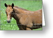 Quarter Horses Greeting Cards - Looking Out  Greeting Card by Juls Adams