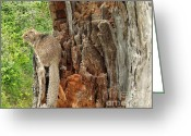 Squirrel Photographs Greeting Cards - Looking Out My Back Door Greeting Card by Methune Hively